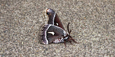 Photograph - Butterfly In Oregon by Sven Fauth
