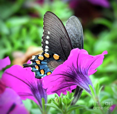 Photograph - Butterfly In Pink Flowers by Kerri Farley