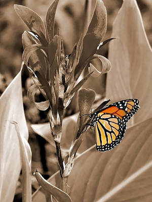 Butterfly In Sepia Art Print