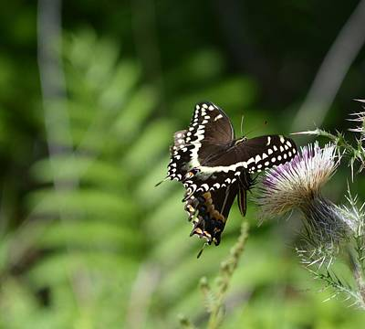 Photograph - Butterfly In The Forest by rd Erickson