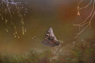 Digital Art - Butterfly In The Mist by Ericamaxine Price