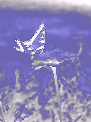 Butterfly In The Mist Art Print