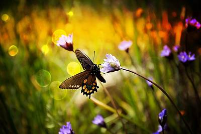 Photograph - Butterfly In The Spring by Serena King