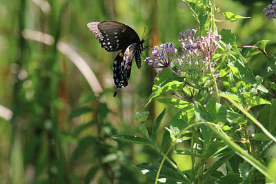 Photograph - Butterfly In The Sun by Captain Debbie Ritter