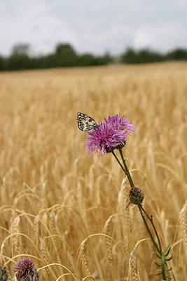 Butterfly In Wheat Field Art Print by Jessica Rose