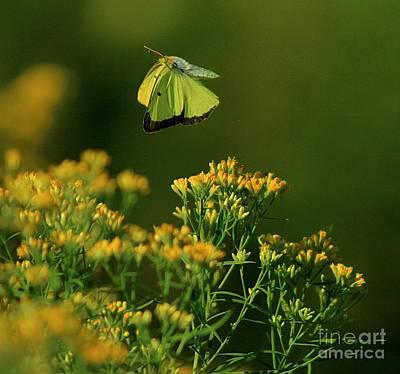 Butterfly-ing Art Print