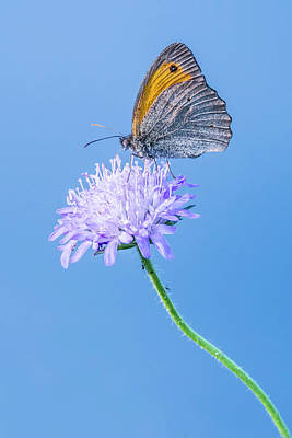 Photograph - Butterfly by Jaroslaw Grudzinski