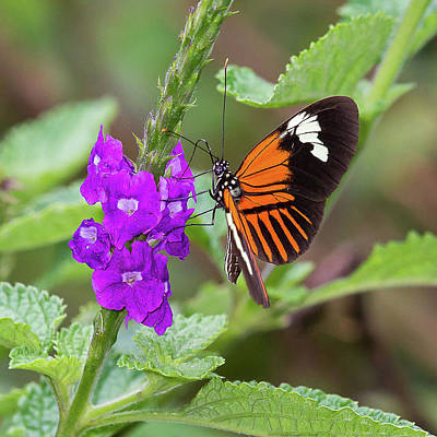 Photograph - Butterfly by Jean-Luc Baron