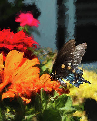 Photograph - Butterfly by Jim Hill