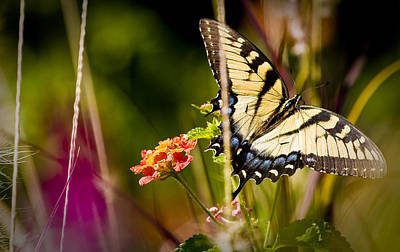 Photograph - Butterfly Jungle by Ches Black