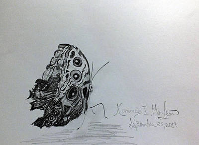 Drawing - Butterfly by Kimmary MacLean