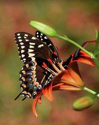 Photograph - Butterfly Kiss 2 by Sheri McLeroy