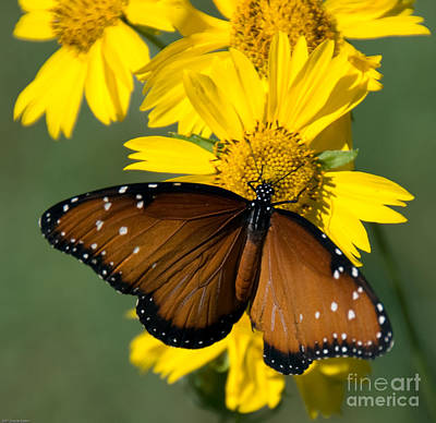 Butterfly Kisses Art Print by Charles Dobbs