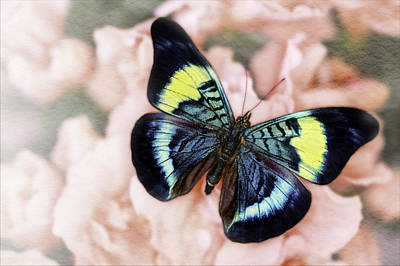 Fluttering Photograph - Butterfly Kisses by Janet Fikar