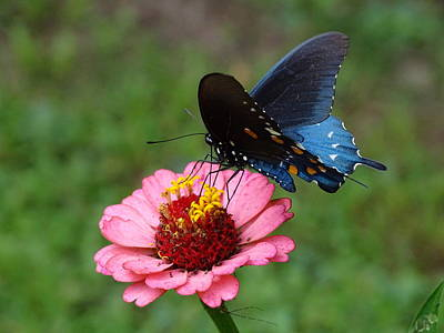 Photograph - Butterfly Kisses. by Mary Halpin
