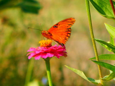 Photograph - Butterfly Kisses by Virginia Kay White