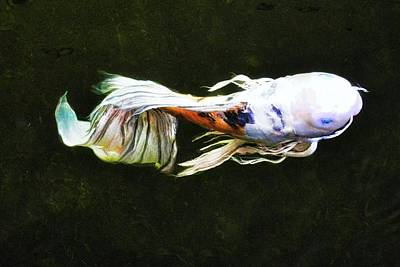 Butterfly Koi Fish Art Print