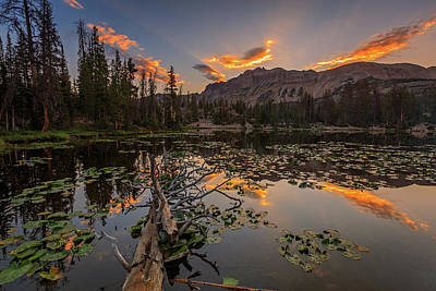 Lilies Royalty-Free and Rights-Managed Images - Butterfly Lake Sunrise. by Johnny Adolphson