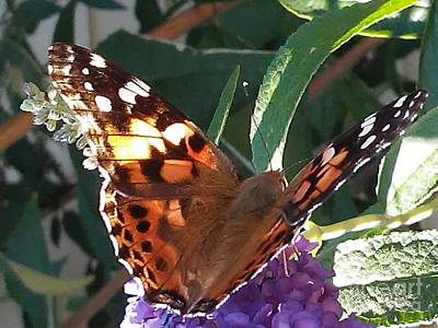 Photograph - Butterfly Landing by Marlene Williams