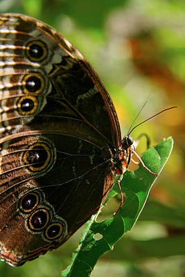 Photograph - Butterfly by Lawrence Boothby