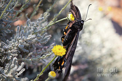 Photograph - Butterfly by Lawrence Burry