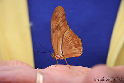Photograph - Butterfly Life by Brenda Redford