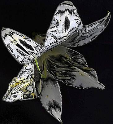 Art Print featuring the photograph Butterfly Lily by Carolyn Repka