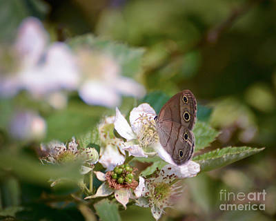 Butterfly Photograph - Butterfly - Little Wood Satyr by Kerri Farley