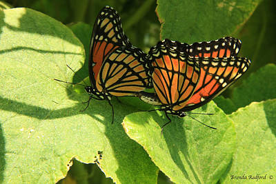 Photograph - Butterfly Love by Brenda Redford