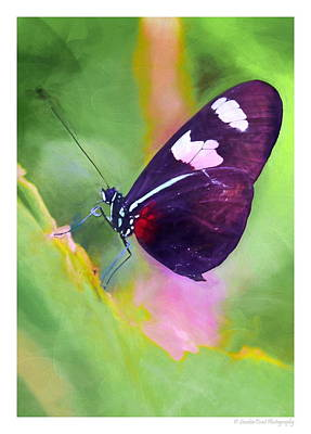 Painting - Butterfly Love by Christopher Wieck