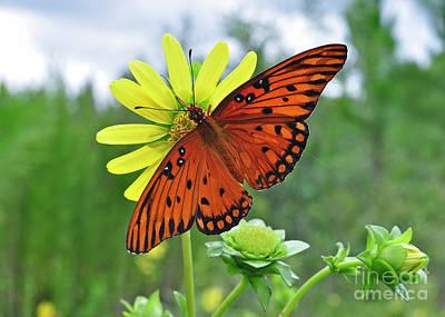 Photograph - Butterfly Lunch Break by Nanette OHara