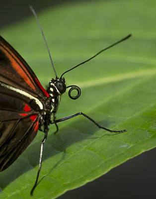 Butterlfy Photograph - Butterfly Macro by Kirk Fry