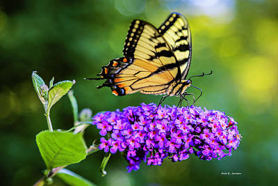 Photograph - Butterfly Magic by Dale R Carlson
