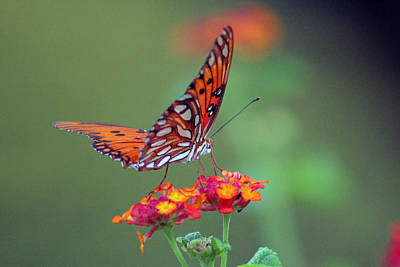 Butterfly Majestic Art Print