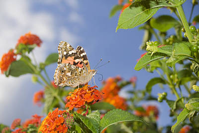 Photograph - Butterfly by Marc Huebner