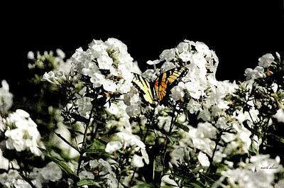 Photograph - Butterfly by Mark Alesse