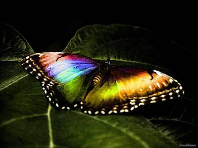 Nature Digital Art - Butterfly by Maye Loeser