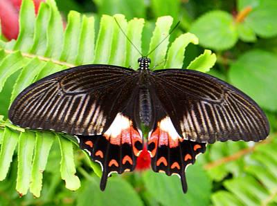 Butterfly Maze Art Print by Jean Haynes