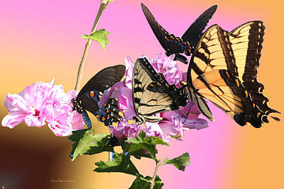 Photograph - Butterfly Meet by EricaMaxine  Price
