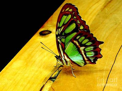 San Francisco Cali Photograph - Butterfly by Michael Grubb