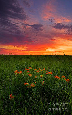 Photograph - Butterfly Milkweed In A Prairie by Kenneth M Highfill
