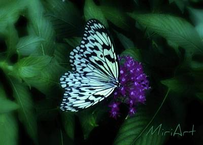 Art Print featuring the photograph Butterfly by Miriam Shaw