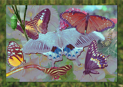 Digital Art - Butterfly Montage by Richard Nickson