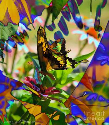 Photograph - Butterfly Montage by Toma Caul