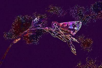 Digital Art - Butterfly Nature Butterflies Insect  by PixBreak Art