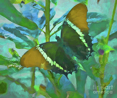 Photograph - Butterfly Nature by Steven Parker