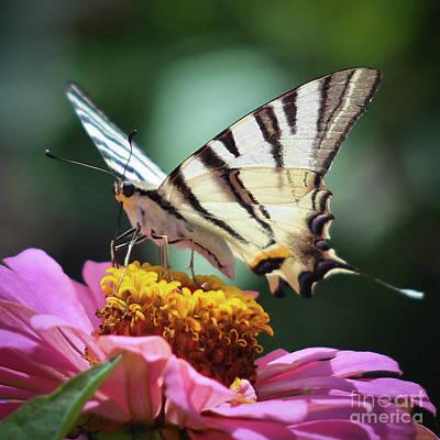 Photograph - Butterfly by Nedko  Nedkov