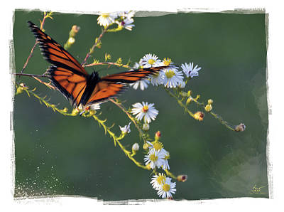 Photograph - Butterfly No3 by Sam Davis Johnson