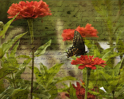 Photograph - Butterfly Notes by Trish Tritz