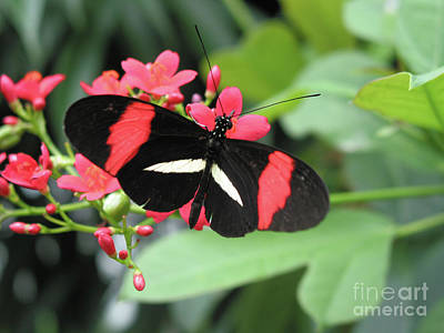 Photograph - Butterfly Of Key West I by Ania M Milo